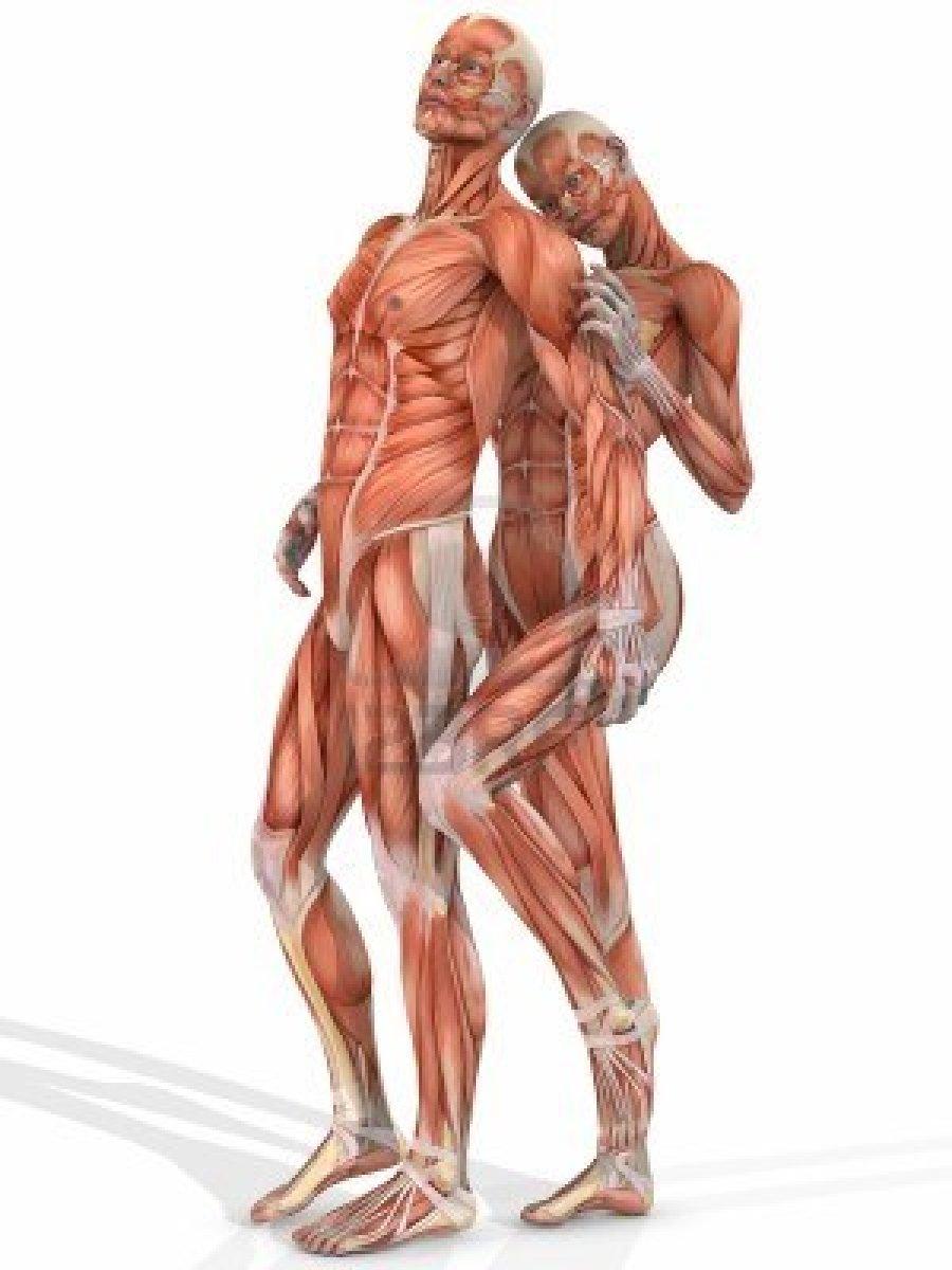 best Anatomia Del Cuerpo Humano Musculos Dela Espalda image collection